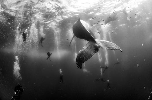 Whale Whisperers Nature, second prize singles. Anwar Patjane Floriuk.
